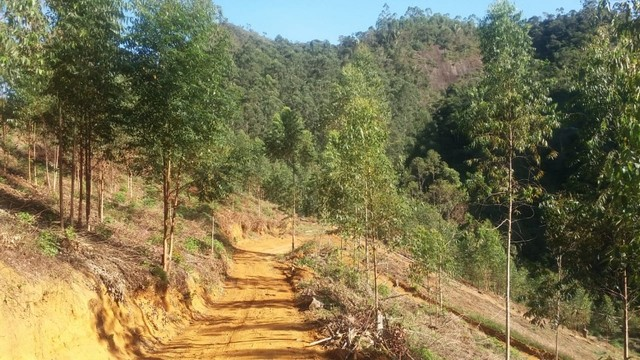 DM- Sítio/Terreno Grande em Santa Teresa 13 hectares - Foto 15