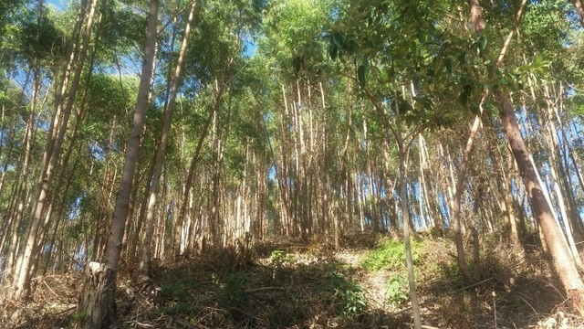 DM- Sítio/Terreno Grande em Santa Teresa 13 hectares - Foto 17