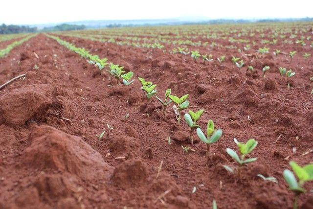 Invista no campo crédito rural para plantio, reforma de pasto em geral. - Foto 4