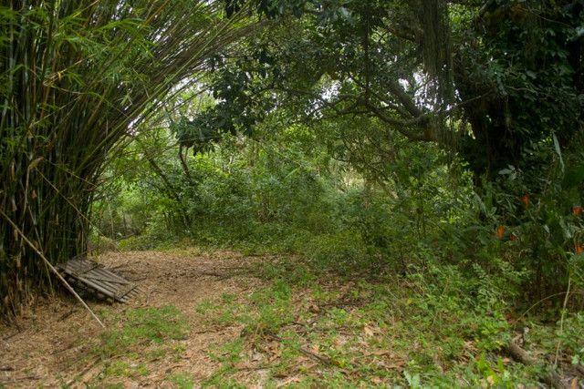 Área Rural de 42.209m² - Foto 3