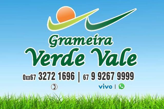 Grama Esmeralda (A partir) R3,00m² Leia o anúncio