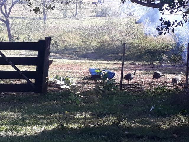 Chácara com caneiros, aves, tanque com peixes na BR 364 - Foto 2
