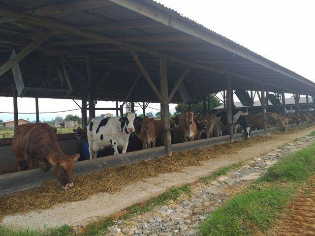 Terreno rural - Foto 6