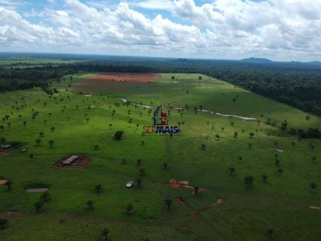 Fazenda à venda, por R$ 11.594.000 - Alta Floresta D'Oeste/RO - Foto 9