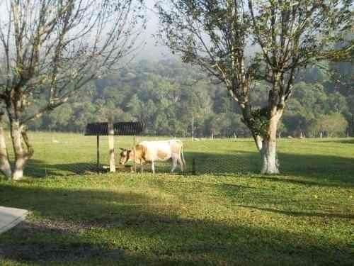 Terreno Rural Sitio /Chácara com 5,5 alqueires (porteira fechada) ótima localização