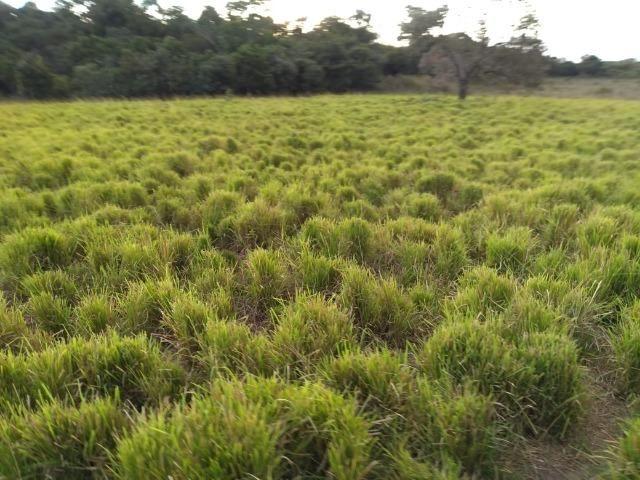 Excelente Fazenda de 1.955,79 Hectares em Formosa-GO - Foto 4