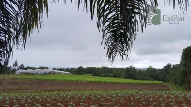 Terreno na colônia murici em são josé dos pinhais. - Foto 12