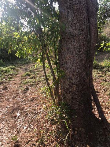 Chácara a 5 Km de Avelinópolis,10 km de Araçu - Foto 5