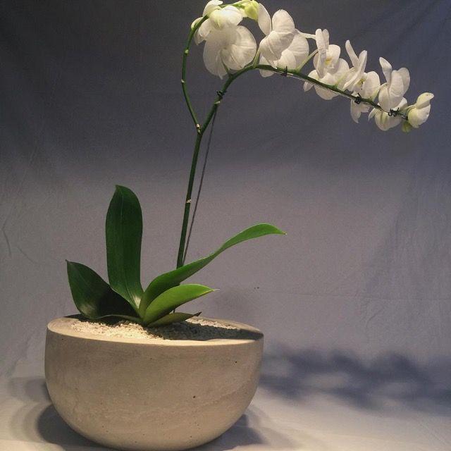 Vaso de cimento com orquídea natural - Foto 2