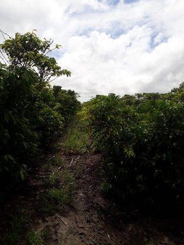 Vendo terreno produtivo - Foto 2