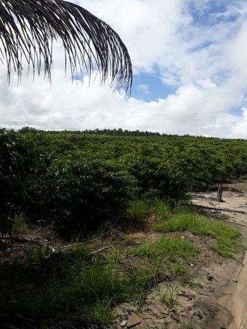Vendo terreno produtivo - Foto 10
