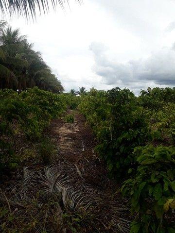 Vendo terreno produtivo - Foto 6