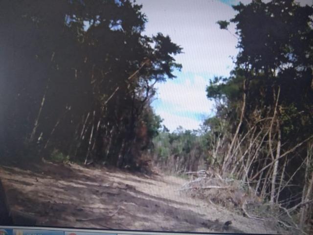 """Lotes de 500 m2 em Esmeraldas/MG comunidade """"Bambus"""" - Foto 7"""