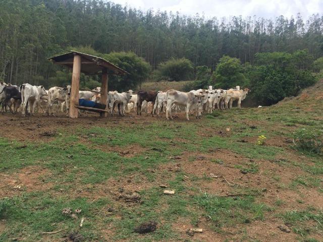 Venda-se está fazenda de 250 alqueires no Município de Fervedouro/MG - Foto 14