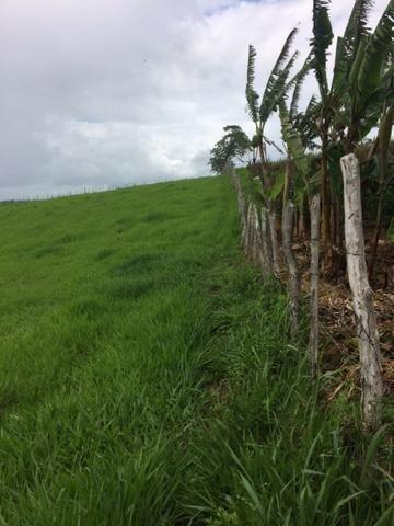 Fazenda-Granja-Sítio com 21 Hectares em Aliança - Foto 17