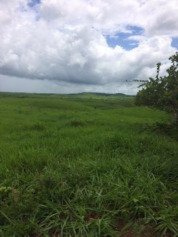 Fazenda-Granja-Sítio com 21 Hectares em Aliança - Foto 9