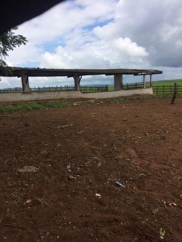 Fazenda-Granja-Sítio com 21 Hectares em Aliança - Foto 7