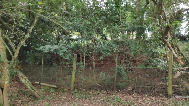 Laudo de poda ou corte de árvores com biólogo habilitado