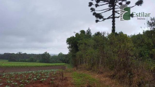 Terreno na colônia murici em são josé dos pinhais. - Foto 6