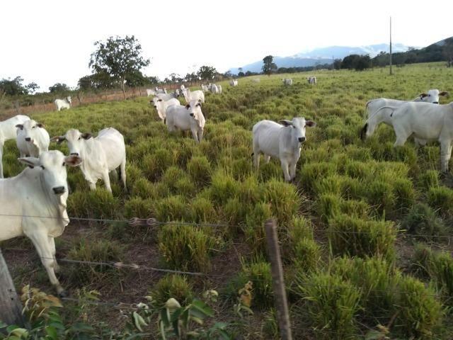 Excelente Fazenda de 1.955,79 Hectares em Formosa-GO - Foto 14