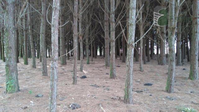Chácara no campo largo da roseira, são josé dos pinhais - ar0019. - Foto 12