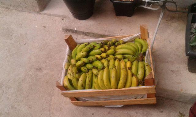 Bananas direto da chacara ,sem agrotóxicos