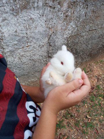 Vende-se coelhos R$ 35,00. Em Ji-Parana - Foto 3