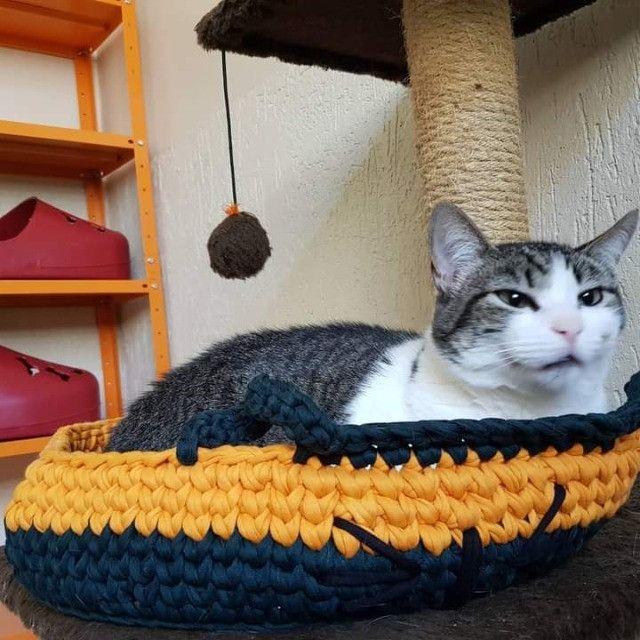 Gatinha castrada para adoção - Foto 2