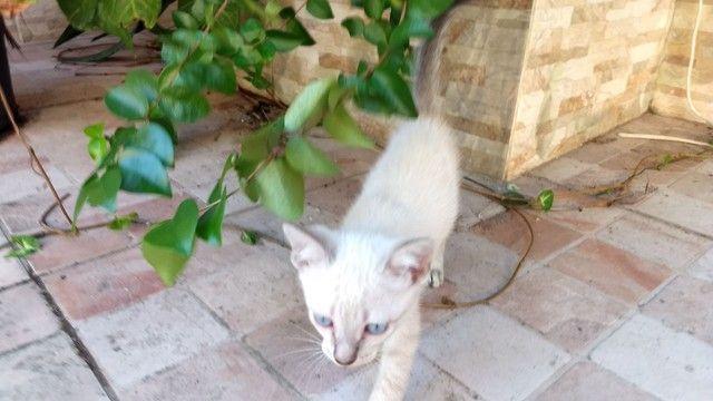 Lindas gatinhas filhotes para adoção.