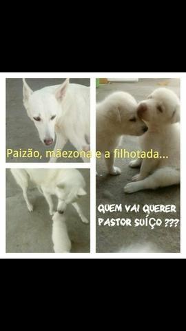 Pastor suíço