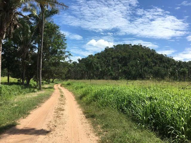 Fazenda com 980 hectares no município de Palmeirais-PI, 95 km de Teresina - Foto 16