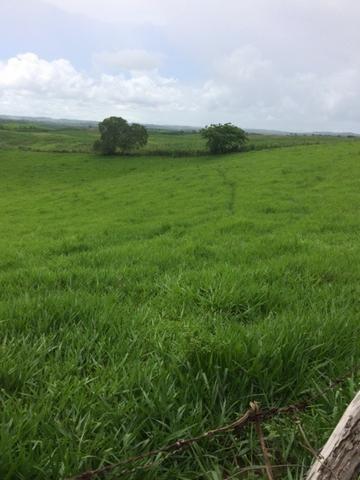 Fazenda-Granja-Sítio com 21 Hectares em Aliança - Foto 11