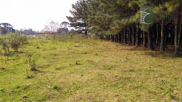 Chácara no campo largo da roseira, são josé dos pinhais - ar0019.