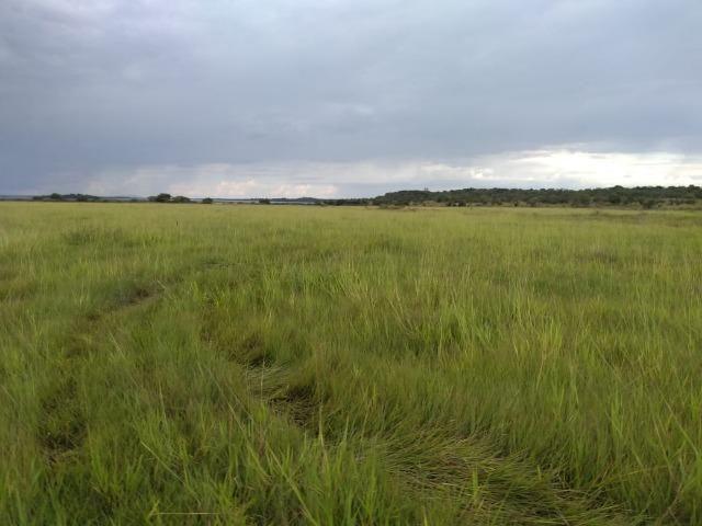 Excelente Fazenda de 1.955,79 Hectares em Formosa-GO - Foto 8