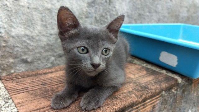 Lindas gatinhas filhotes para adoção. - Foto 5