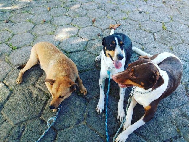 Adestrador de cães - Foto 4