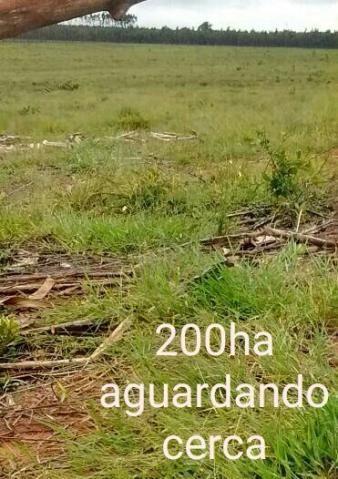 Fazenda ribas do rio pardo - 237 alq paulista