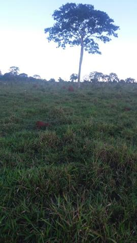 Fazenda de 114 alqueires - Aparecida do Taboado-MS-F090219 - Foto 5