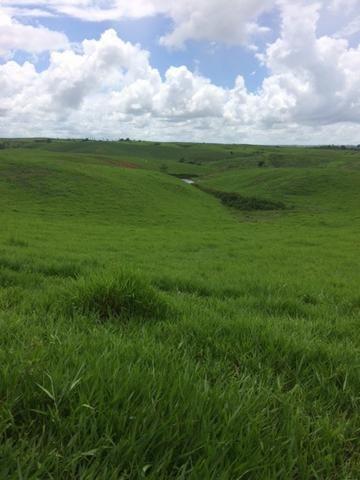 Fazenda-Granja-Sítio com 21 Hectares em Aliança - Foto 12