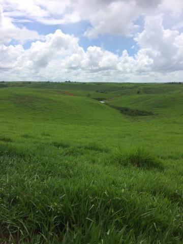 Fazenda-Granja-Sítio com 21 Hectares em Aliança - Foto 10