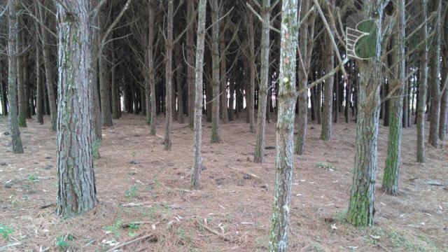 Chácara no campo largo da roseira, são josé dos pinhais - ar0019. - Foto 3
