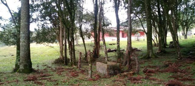 Chácara 3,0 Ha Campestre da Serra - Foto 4