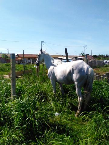 Procura-se esse cavalo