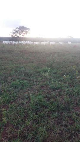 Fazenda de 114 alqueires - Aparecida do Taboado-MS-F090219 - Foto 7