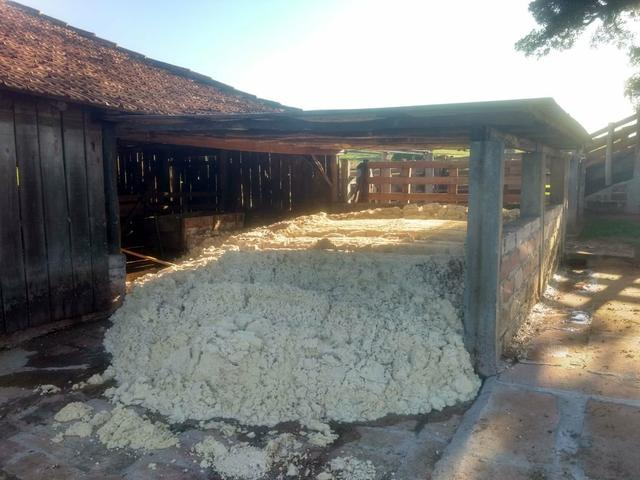 Trato para confinamento - Massa de Soja - Foto 3