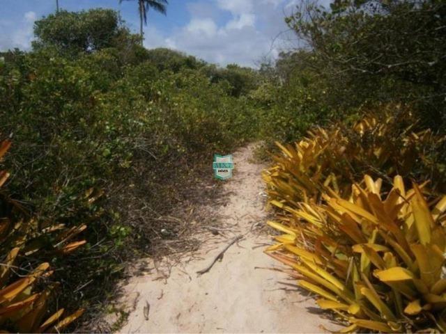 Itacaré. Fazenda de frente para o mar com 100 Hectares - Foto 10