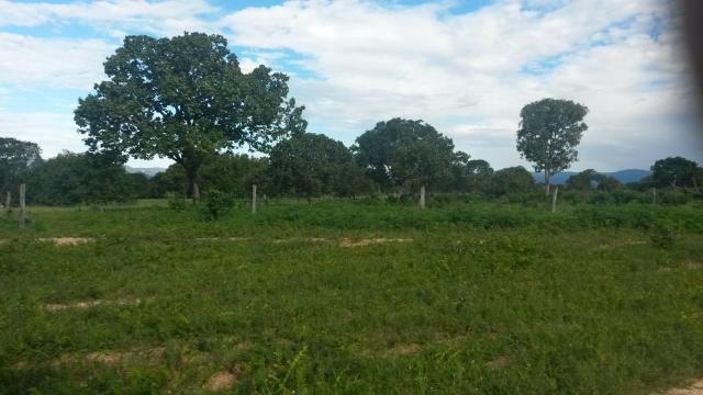 Fazenda de 300 alqueires em cavalcante go - Foto 3