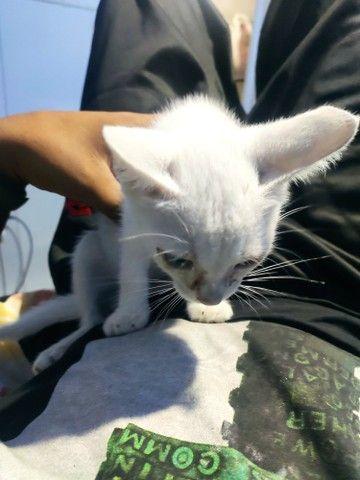 Estou doando essa gatinha - Foto 2