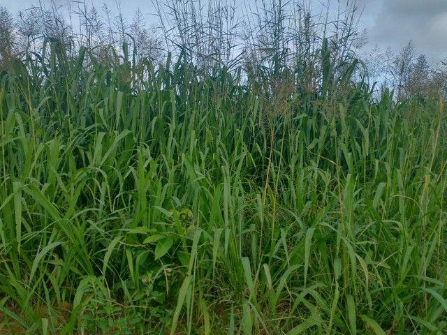 Fazenda #super barata 01 ref#1006