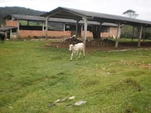 Terreno Rural Sitio /Chácara com 5,5 alqueires (porteira fechada) ótima localização - Foto 6